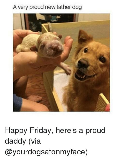 avery proud new father dog happy friday heres a proud 1649142 search happy dog memes on me me,Dog Dad Meme