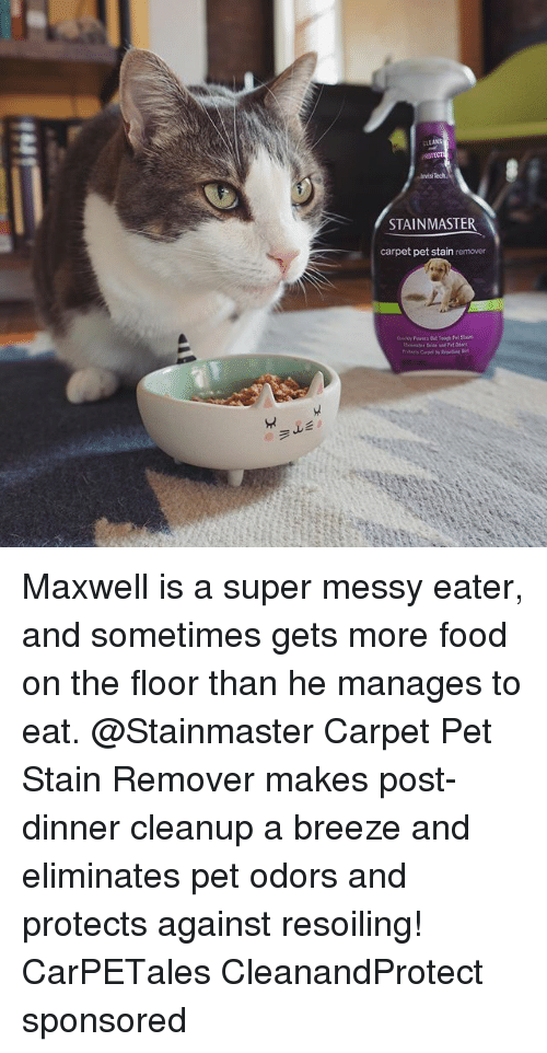 Food, Memes, and 🤖: avisi  STAINMASTER  carpet pet stain remover Maxwell is a super messy eater, and sometimes gets more food on the floor than he manages to eat. @Stainmaster Carpet Pet Stain Remover makes post-dinner cleanup a breeze and eliminates pet odors and protects against resoiling! CarPETales CleanandProtect sponsored