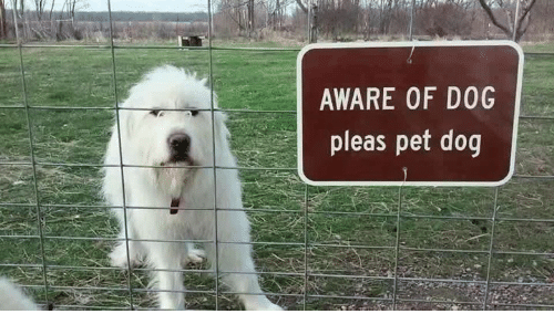 Aware Of Dog Pleas Pet Dog