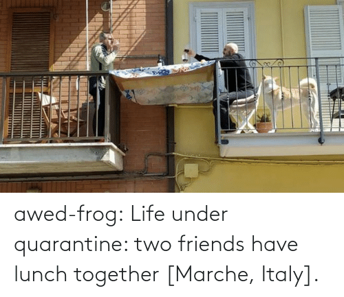 Friends, Life, and Tumblr: awed-frog:  Life under quarantine: two friends have lunch together [Marche, Italy].