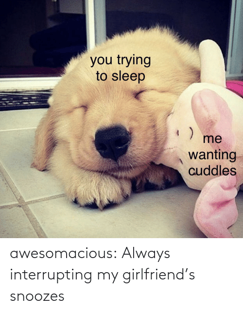 Tumblr, Blog, and Girlfriend: awesomacious:  Always interrupting my girlfriend's snoozes