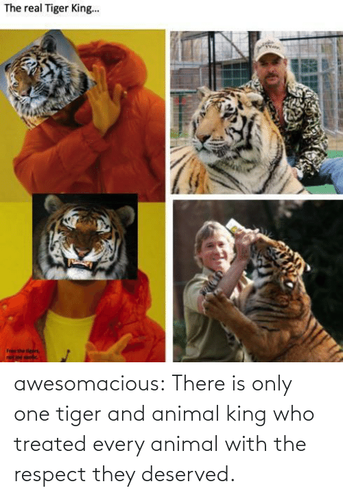 Animal: awesomacious:  There is only one tiger and animal king who treated every animal with the respect they deserved.