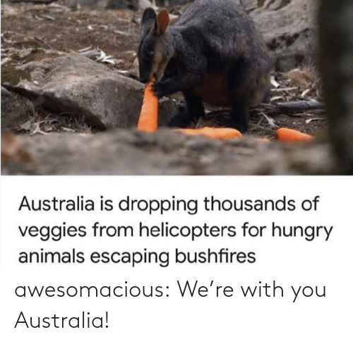 Australia: awesomacious:  We're with you Australia!