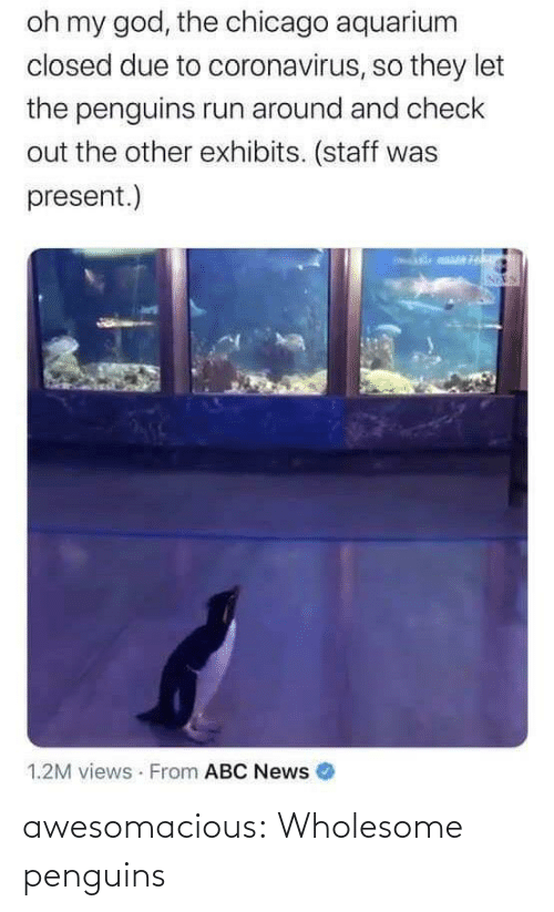 Penguins: awesomacious:  Wholesome penguins