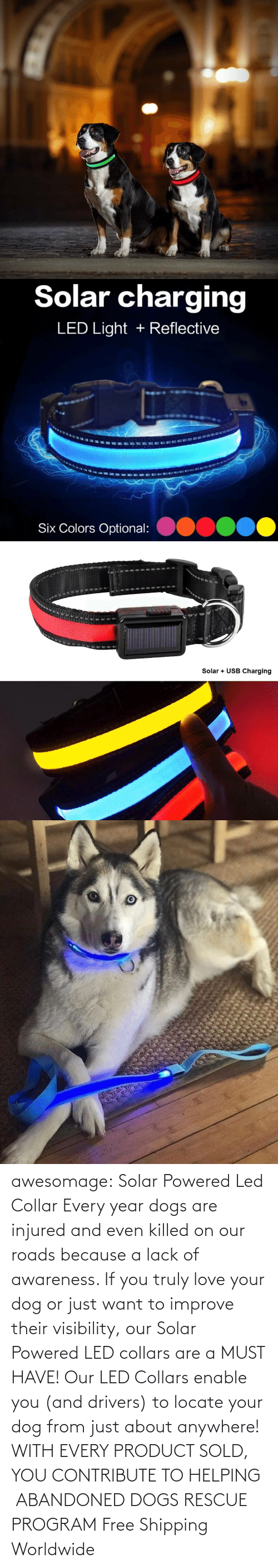 lack: awesomage: Solar Powered Led Collar   Every year dogs are injured and even killed on our roads because a lack of awareness. If you truly love your dog or just want to improve their visibility, our Solar Powered LED collars are a MUST HAVE!   Our LED Collars enable you (and drivers) to locate your dog from just about anywhere!     WITH EVERY PRODUCT SOLD, YOU CONTRIBUTE TO HELPING ABANDONED DOGS RESCUE PROGRAM     Free Shipping Worldwide