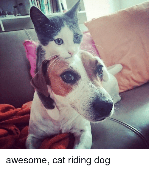 Thinking Cat: awesome, cat riding dog
