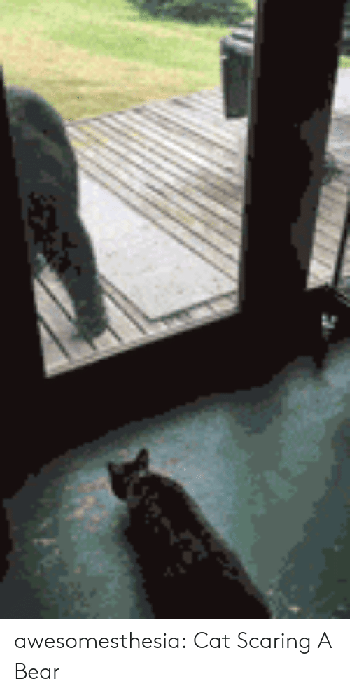 scaring: awesomesthesia:  Cat Scaring A Bear