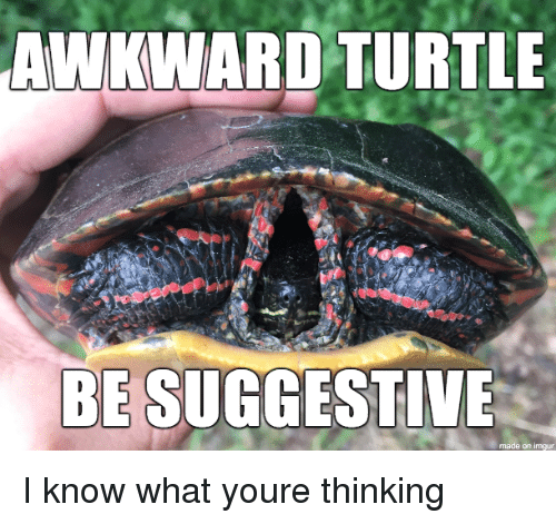 suggestive: AWKWARD TURTLE  BE SUGGESTIVE  made on imgur I know what youre thinking