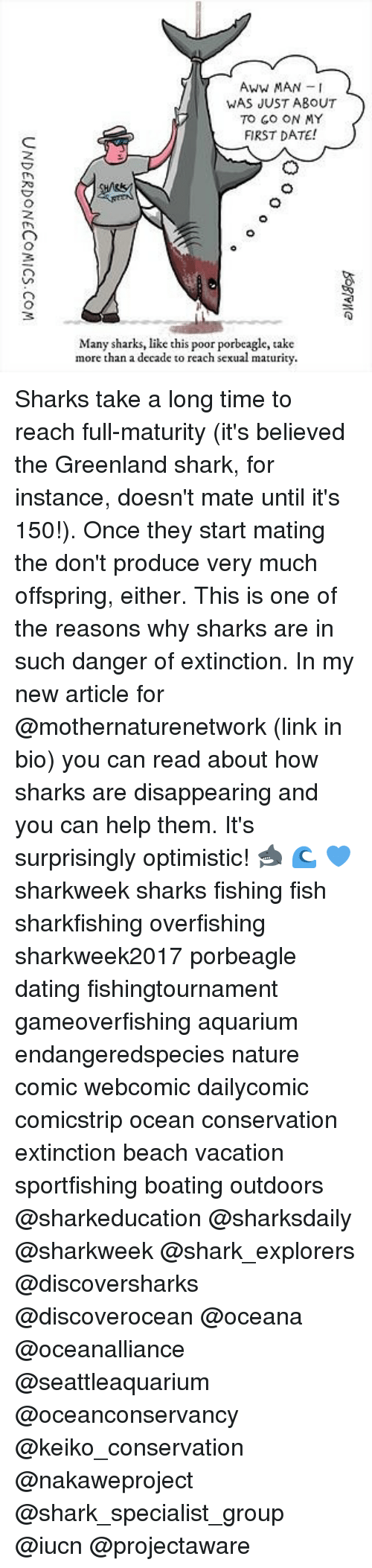 Aww, Dating, and Memes: Aww MAN I  WAS JUST ABOUT  TO GO ON MY  FIRST DATE!  3  Many sharks, like this poor porbeagle, take  more than a decade to reach sexual maturity. Sharks take a long time to reach full-maturity (it's believed the Greenland shark, for instance, doesn't mate until it's 150!). Once they start mating the don't produce very much offspring, either. This is one of the reasons why sharks are in such danger of extinction. In my new article for @mothernaturenetwork (link in bio) you can read about how sharks are disappearing and you can help them. It's surprisingly optimistic! 🦈 🌊 💙 sharkweek sharks fishing fish sharkfishing overfishing sharkweek2017 porbeagle dating fishingtournament gameoverfishing aquarium endangeredspecies nature comic webcomic dailycomic comicstrip ocean conservation extinction beach vacation sportfishing boating outdoors @sharkeducation @sharksdaily @sharkweek @shark_explorers @discoversharks @discoverocean @oceana @oceanalliance @seattleaquarium @oceanconservancy @keiko_conservation @nakaweproject @shark_specialist_group @iucn @projectaware