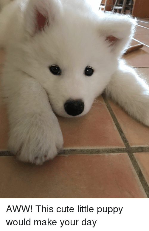Aww, Cute, and Puppy: AWW! This cute little puppy would make your day
