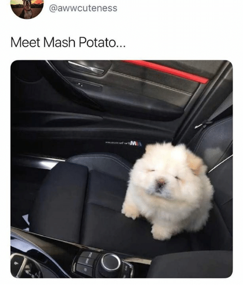 Relationships, Potato, and Mash: @awwcuteness  Meet Mash Potato...
