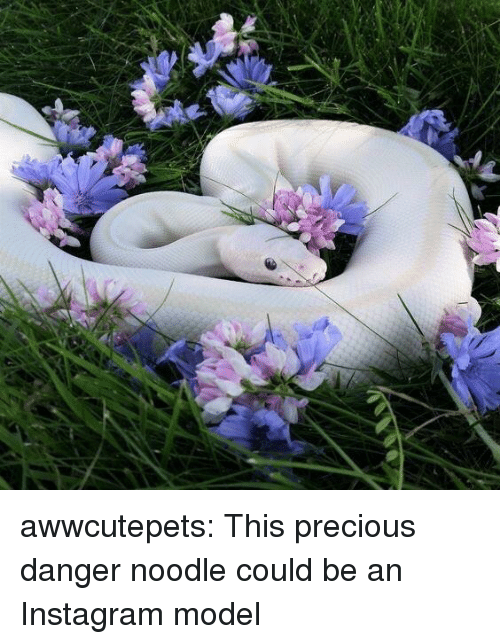 Danger Noodle: awwcutepets:  This precious danger noodle could be an Instagram model