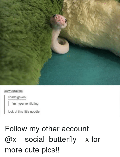 Cute, Memes, and Butterfly: awwdorables:  charleighvon:  I'm hyperventilating  look at this little noodle Follow my other account @x__social_butterfly__x for more cute pics!!