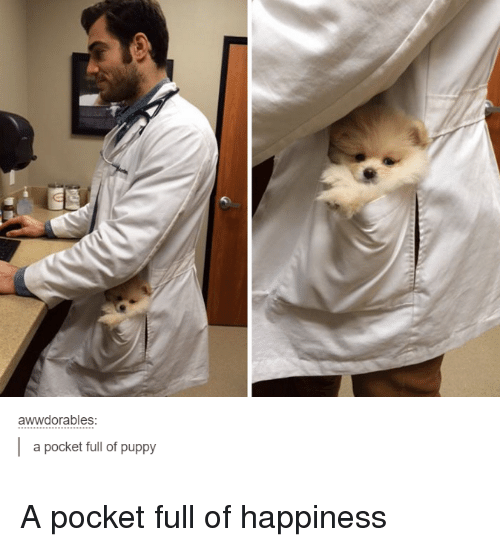 Puppies, Puppy, and Humans of Tumblr: awwdorables  I a pocket full of puppy A pocket full of happiness