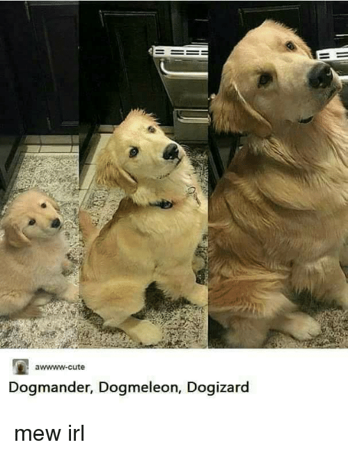 No Money Png >> Awwww-Cute Dogmander Dogmeleon Dogizard | Cute Meme on SIZZLE