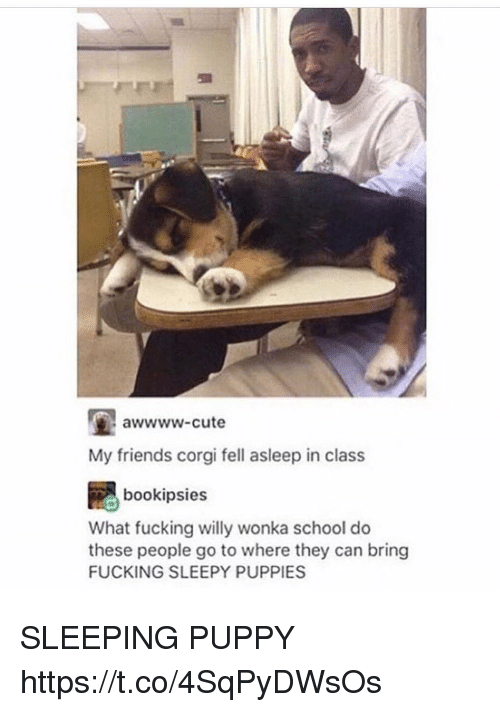 Corgi, Cute, and Friends: awwww-cute  My friends corgi fell asleep in class  bookipsies  What fucking willy wonka school do  these people go to where they can bring  FUCKING SLEEPY PUPPIES SLEEPING PUPPY https://t.co/4SqPyDWsOs