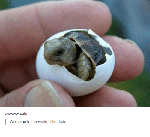 Cute, Dude, and World: awwww-cute:  Welcome to the world, little dude.