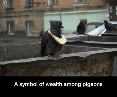 pigeons: AX  A symbol of wealth among pigeons