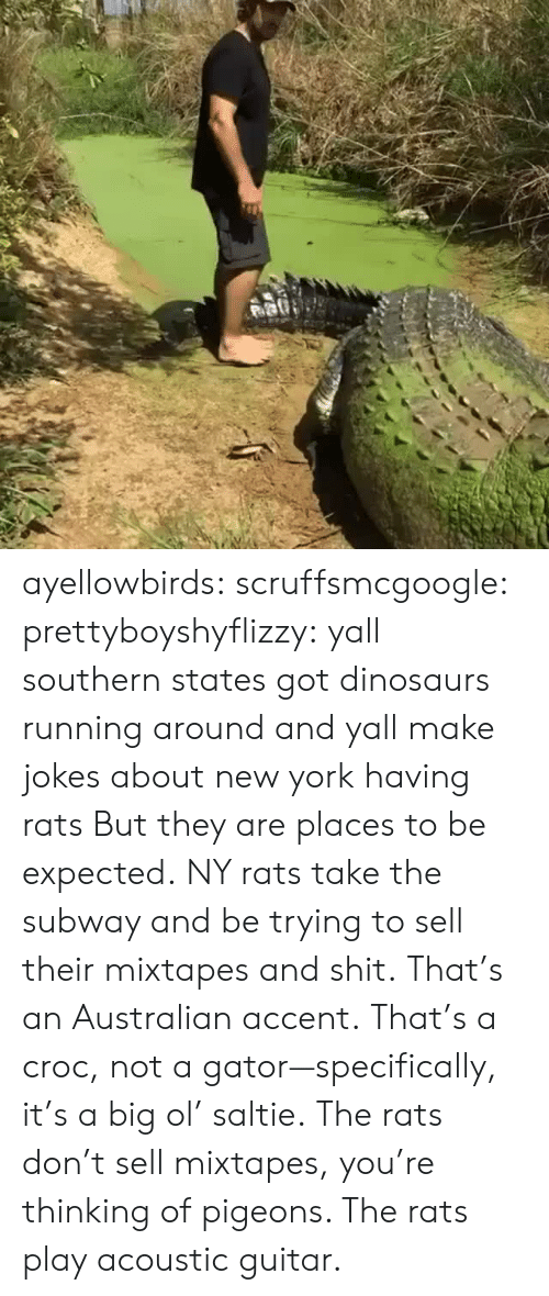 Mixtapes: ayellowbirds: scruffsmcgoogle:  prettyboyshyflizzy: yall southern states got dinosaurs running around and yall make jokes about new york having rats  But they are places to be expected. NY rats take  the subway and be trying to sell their mixtapes and shit.  That's an Australian accent. That's a croc, not a gator—specifically, it's a big ol' saltie. The rats don't sell mixtapes, you're thinking of pigeons. The rats play acoustic guitar.