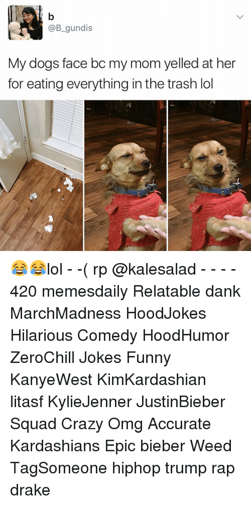 Hilariousness: @B gundis  My dogs face bc my mom yelled at her  for eating everything in the trash lol 😂😂lol - -( rp @kalesalad - - - - 420 memesdaily Relatable dank MarchMadness HoodJokes Hilarious Comedy HoodHumor ZeroChill Jokes Funny KanyeWest KimKardashian litasf KylieJenner JustinBieber Squad Crazy Omg Accurate Kardashians Epic bieber Weed TagSomeone hiphop trump rap drake