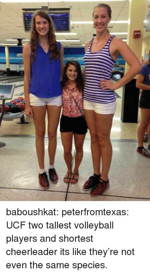 Cheerleader: baboushkat:  peterfromtexas:  UCF two tallest volleyball players and shortest cheerleader  its like they're not even the same species.
