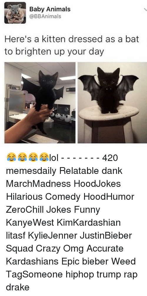 Baby Animals: Baby Animals  @BBAnimals  Here's a kitten dressed as a bat  to brighten up your day 😂😂😂😂lol - - - - - - - 420 memesdaily Relatable dank MarchMadness HoodJokes Hilarious Comedy HoodHumor ZeroChill Jokes Funny KanyeWest KimKardashian litasf KylieJenner JustinBieber Squad Crazy Omg Accurate Kardashians Epic bieber Weed TagSomeone hiphop trump rap drake