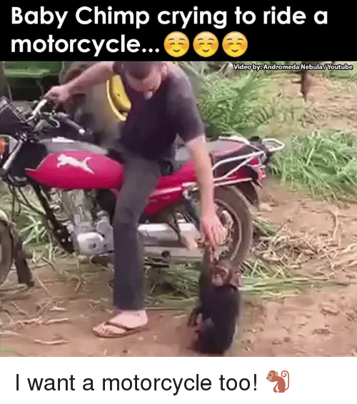 baby chimp: Baby Chimp crying to ride a  motorcycle.  Video by: Andromeda Nebula Youtube I want a motorcycle too! 🐒