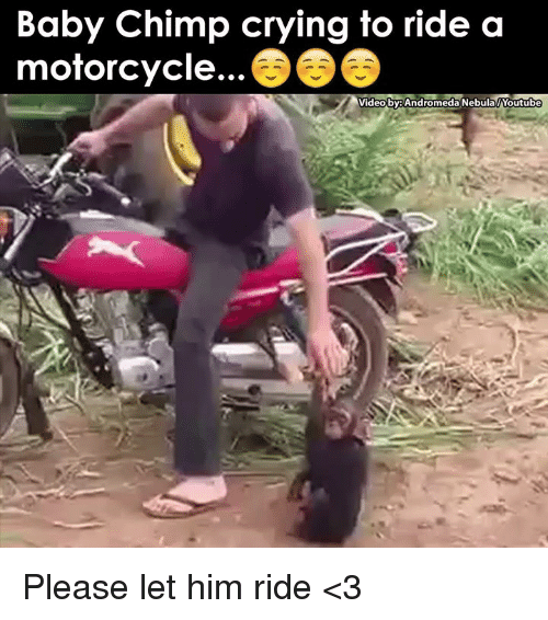 baby chimp: Baby Chimp crying to ride a  motorcycle.  Video by: Andromeda Nebula Youtube Please let him ride <3