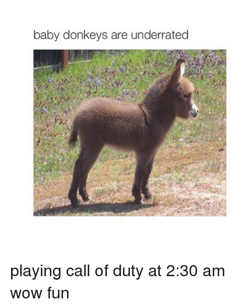 baby donkey: baby donkeys are underrated playing call of duty at 2:30 am wow fun