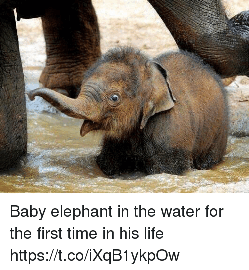 Baby Elephant in the Water for the First Time in His Life ...