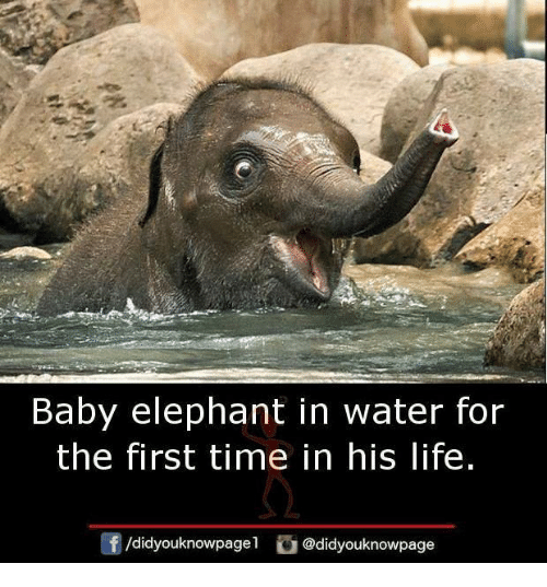 Baby Elephant: Baby elephant in water for  the first time in his life.  @didyouknowpage