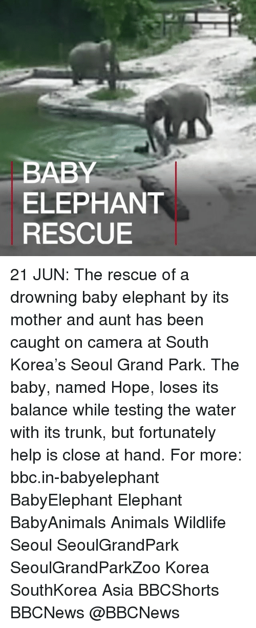 Baby Elephant: BABY  ELEPHANT  RESCUE 21 JUN: The rescue of a drowning baby elephant by its mother and aunt has been caught on camera at South Korea's Seoul Grand Park. The baby, named Hope, loses its balance while testing the water with its trunk, but fortunately help is close at hand. For more: bbc.in-babyelephant BabyElephant Elephant BabyAnimals Animals Wildlife Seoul SeoulGrandPark SeoulGrandParkZoo Korea SouthKorea Asia BBCShorts BBCNews @BBCNews
