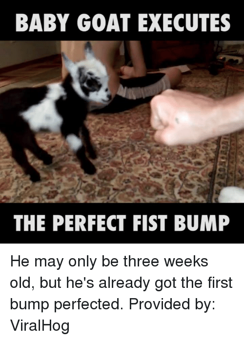 Baby Goats: BABY GOAT EXECUTES  THE PERFECT FIST BUMP He may only be three weeks old, but he's already got the first bump perfected.   Provided by: ViralHog