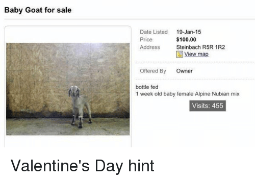 Girl Memes: Baby Goat for sale  Date Listed  19-Jan-15  $100.00  Price  Address  Steinbach R5R 1R2  View map  offered By  Owner  bottle fed  1 week old baby female Alpine Nubian mix  Visits: 455 Valentine's Day hint