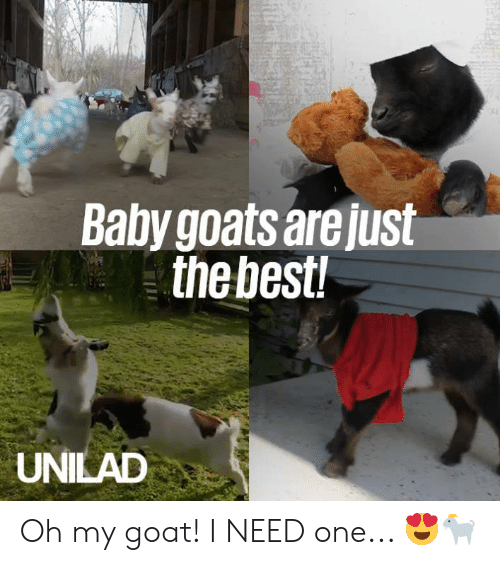 Baby Goats: Baby goats are just  thebest  UNILAD Oh my goat! I NEED one... 😍🐐