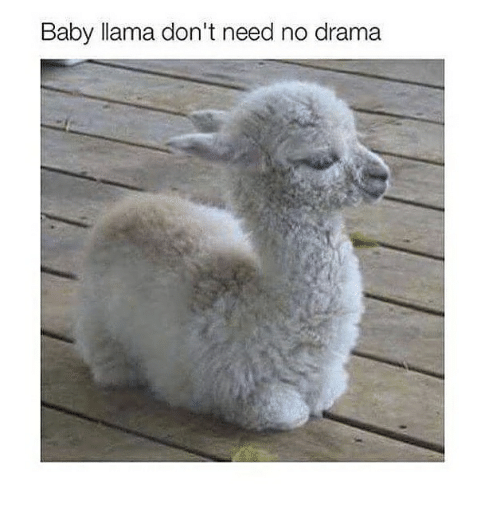Dont Feed The Drama Llama 25+ Best Memes About B...