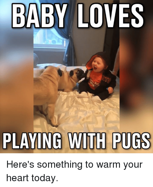 Dank, Love, and Heart: BABY LOVES  PLAYING WITH PUGS Here's something to warm your heart today.
