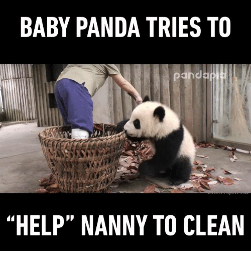"Baby, It's Cold Outside, Memes, and Panda: BABY PANDA TRIES TO  Panda  ""HELP"" NANNY TO CLEAN"