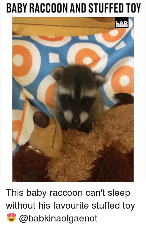 Memes, Raccoon, and Sleep: BABY RACCOON AND STUFFED TOY  LAD  BIBL E This baby raccoon can't sleep without his favourite stuffed toy 😍 @babkinaolgaenot