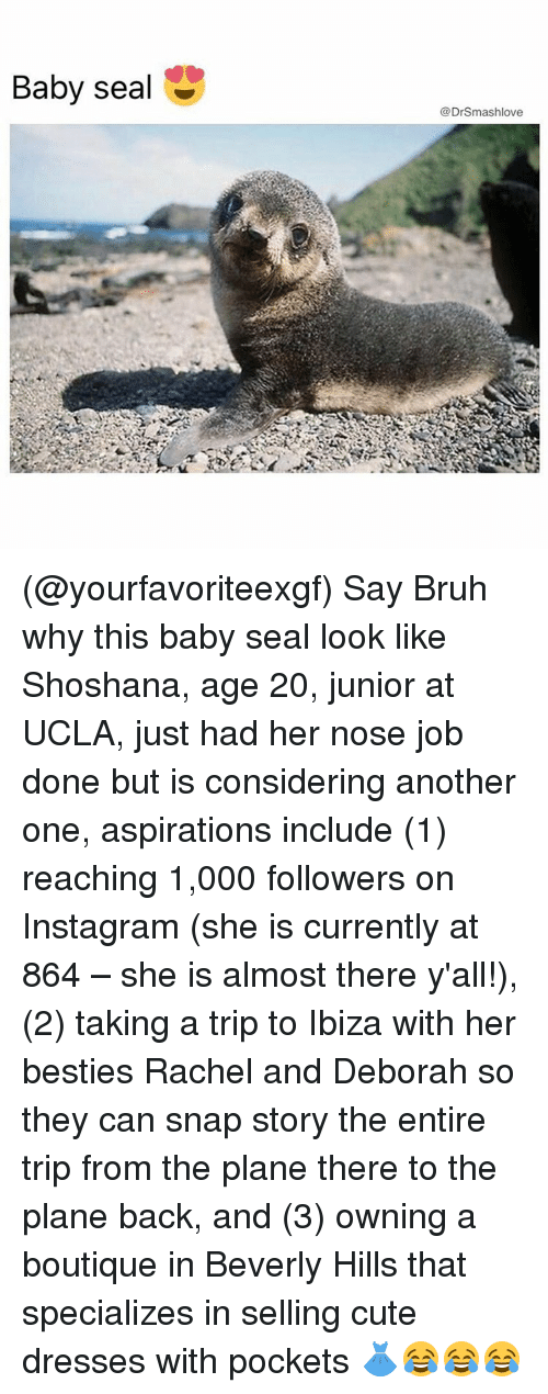 Memes, Seal, and 🤖: Baby seal  mashlo  @Dr (@yourfavoriteexgf) Say Bruh why this baby seal look like Shoshana, age 20, junior at UCLA, just had her nose job done but is considering another one, aspirations include (1) reaching 1,000 followers on Instagram (she is currently at 864 – she is almost there y'all!), (2) taking a trip to Ibiza with her besties Rachel and Deborah so they can snap story the entire trip from the plane there to the plane back, and (3) owning a boutique in Beverly Hills that specializes in selling cute dresses with pockets 👗😂😂😂