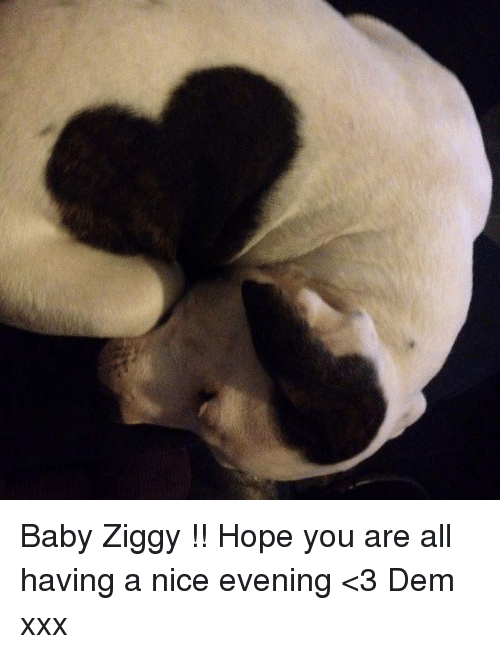 Memes, Xxx, and Hope: Baby Ziggy !! Hope you are all having a nice evening <3 Dem xxx