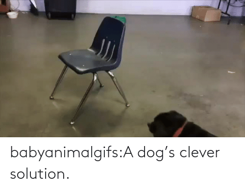 A Dog: babyanimalgifs:A dog's clever solution.