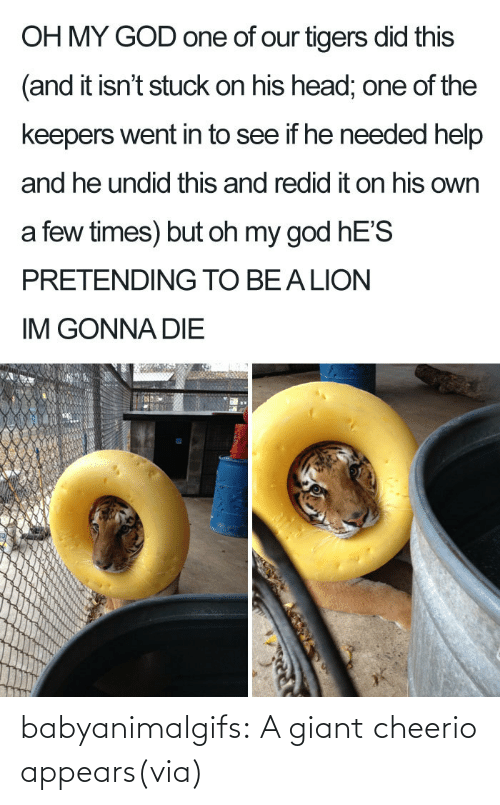 Of Our: babyanimalgifs:  A giant cheerio appears(via)