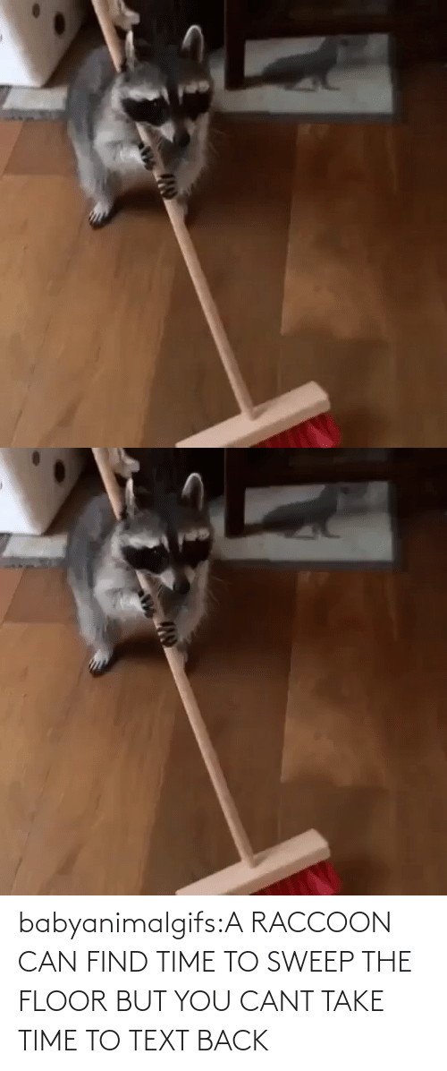 Raccoon: babyanimalgifs:A RACCOON CAN FIND TIME TO SWEEP THE FLOOR BUT YOU CANT TAKE TIME TO TEXT BACK