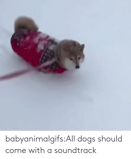 all dogs: babyanimalgifs:All dogs should come with a soundtrack