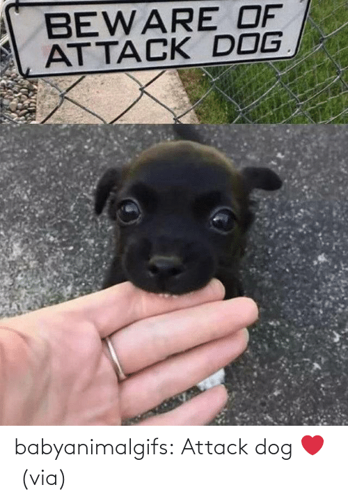 Dog: babyanimalgifs:  Attack dog ❤️ (via)