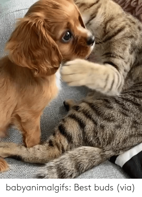 two: babyanimalgifs:  Best buds (via)