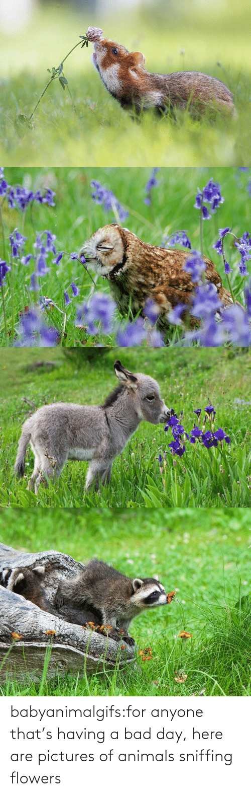 Flowers: babyanimalgifs:for anyone that's having a bad day, here are pictures of animals sniffing flowers