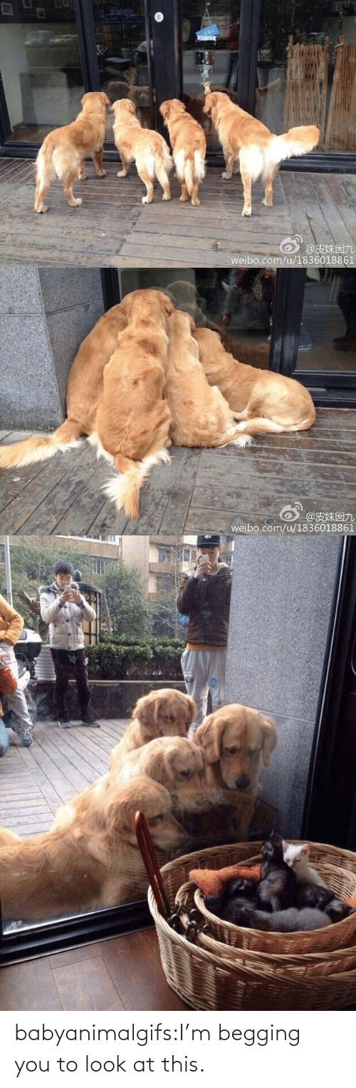 To Look: babyanimalgifs:I'm begging you to look at this.