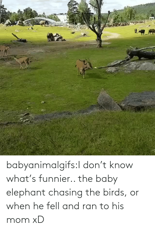 the baby: babyanimalgifs:I don't know what's funnier.. the baby elephant chasing the birds, or when he fell and ran to his mom xD